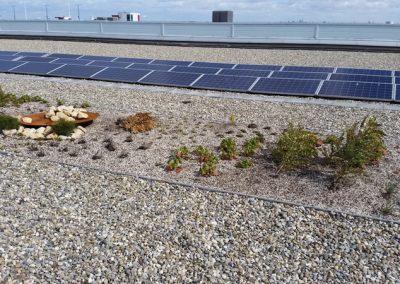 Daktuin en zonnestroomsysteem – Royal Flora Holland